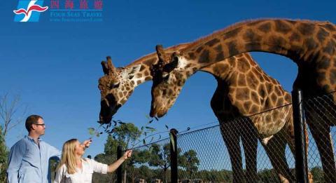 Guests on tour, feeding giraffe at Zoofari Lodge, Taronga Western Plains Zoo Dubbo.