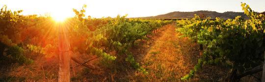 瑪吉(Mudgee),Burnbrae Wines