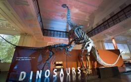 澳洲博物館(Australian Museum)內的恐龍