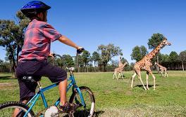杜博(Dubbo),塔龍加西部平原動物園(Taronga Western Plains Zoo)
