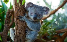 悉尼野生動物園,達令港