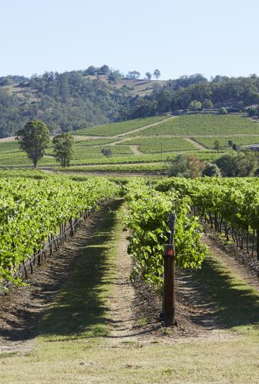 Scenic view of Lindemans Winery, Pokolbin